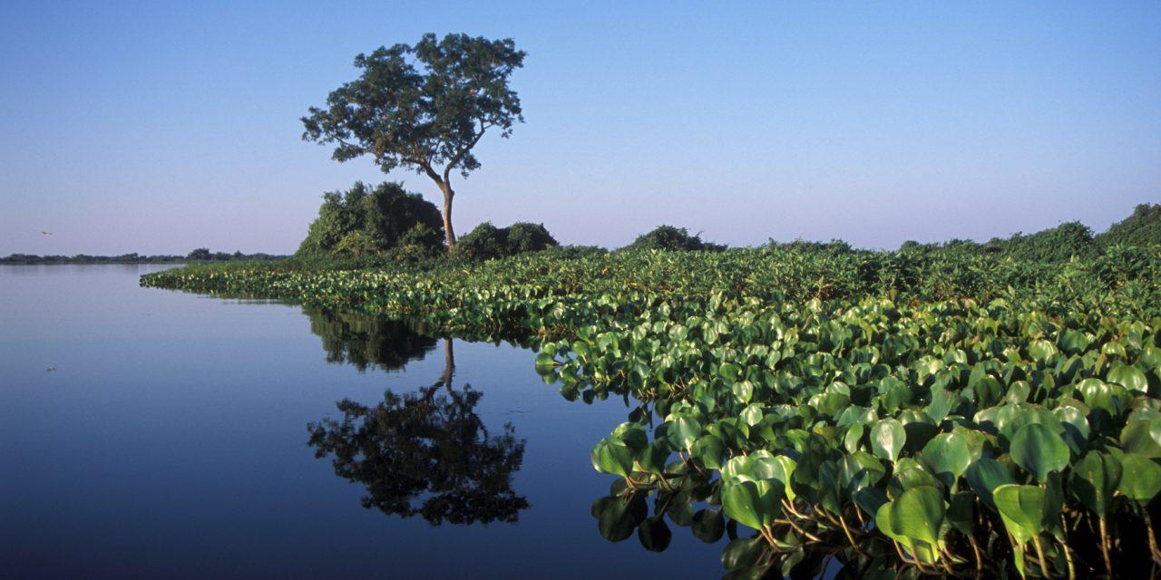 ANA suspende novas hidrelétricas no Pantanal