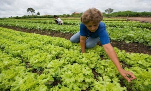 Governo substitui assistência técnica presencial por digital na agricultura familiar