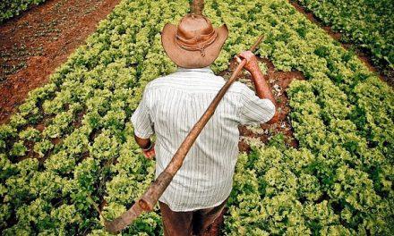 Grupo ligado ao MST vai ao mercado para financiar agricultura familiar