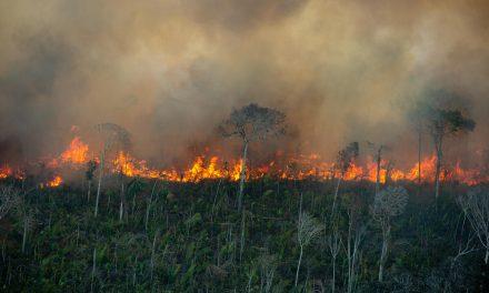 Governo descumpre meta; destruição da Amazônia é segunda pior da série