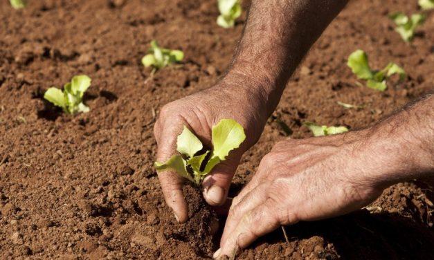 """MST conclui captação recorde no mercado. E """"é só a semente"""""""